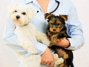 Memorial Veterinary Clinic
