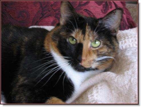 Pet Vet Clinic On Passyunk