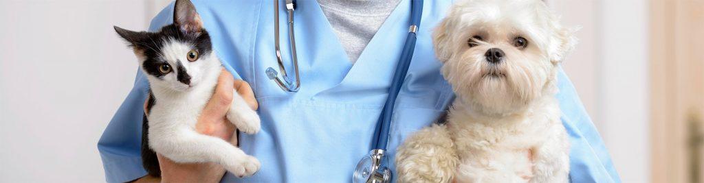 South San Diego Veterinary Hospital