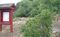 Tecolote Canyon Natural Park and Nature Center