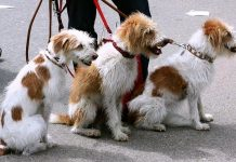 Best Dog Walkers in New York