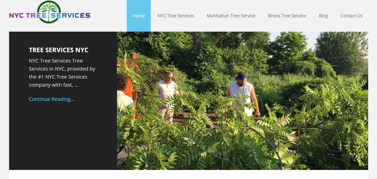 nyc tree service in new york
