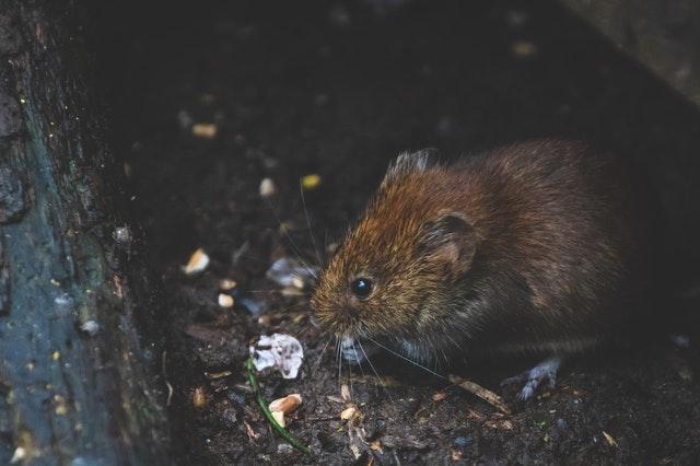 5 Best Exterminators in New York