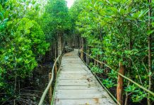 5 Best Bush Walks in San Jose