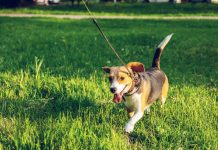 5 Best Dog Walkers in Jacksonville