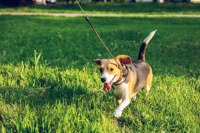 5 Best Dog Walkers in Jacksonville