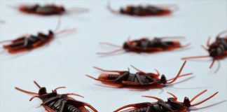 5 Best Pest Control in Houston