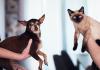 5 Best Pet Care Centre in Austin