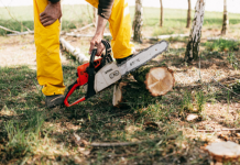 5 Best Tree Services in Los Angeles