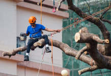 5 Best Tree Services in Phoenix