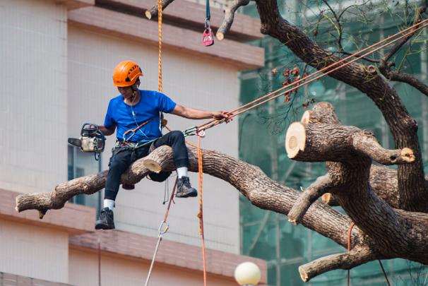 5 Best Tree Services in Phoenix