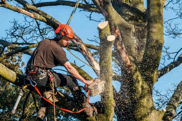 Felix Tree Service