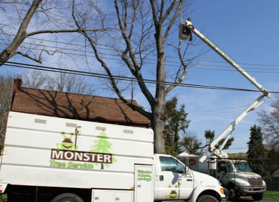 Monster Tree Service of West Valley