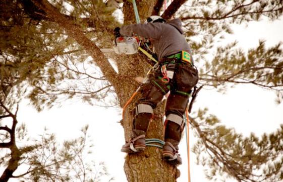 Palacios Tree Service
