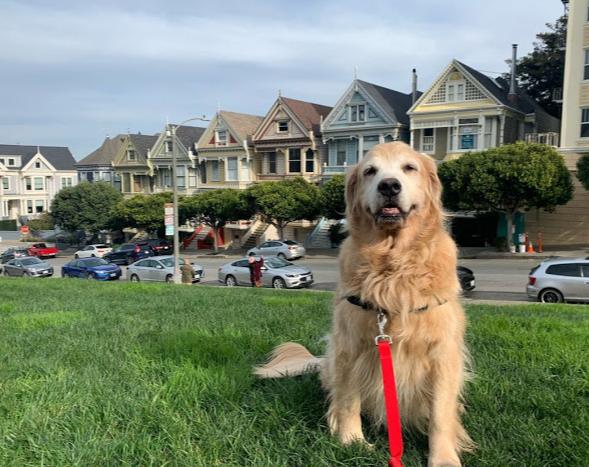 Sniff & Go Dog Walking & Pet Sitting