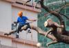 5 Best Arborists in Chicago