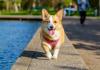 5 Best Dog Walkers in Dallas