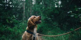 5 Best Dog Walkers in Houston