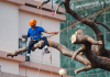5 Best Tree Services in San Francisco