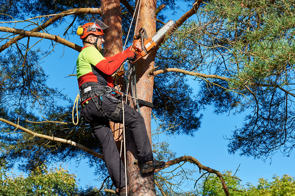 Fernandez Tree Service
