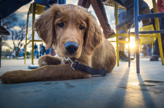 Houston's Best Pet Sitters
