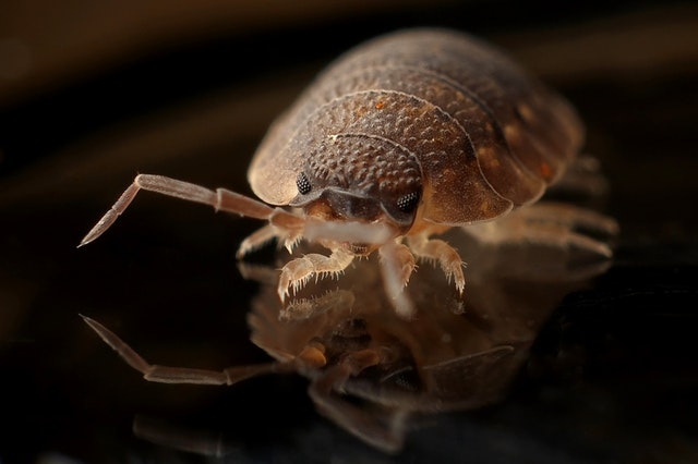 5 Best Pest Control Companies in San Francisco