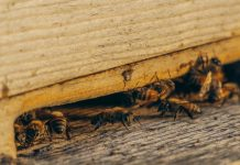 5 Best Exterminators in Los Angeles