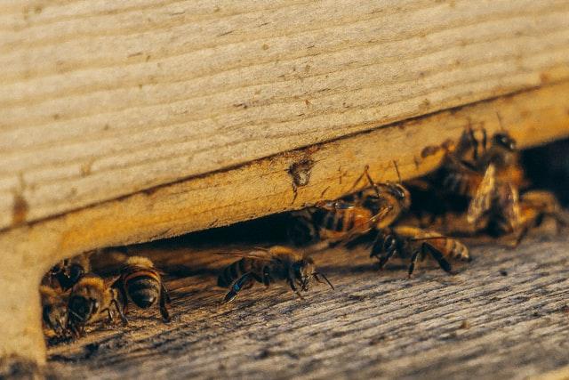 5 Best Exterminators in Los Angeles