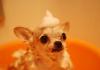 5 Best Dog Grooming in Jacksonville