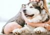 5 Best Dog Walkers in San Diego