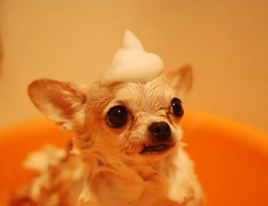 5 Best Doggy Day Care Centre in Austin