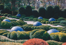 5 Best Landscaping Companies in Austin