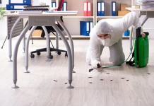 5 Best Pest Control Companies in San Diego