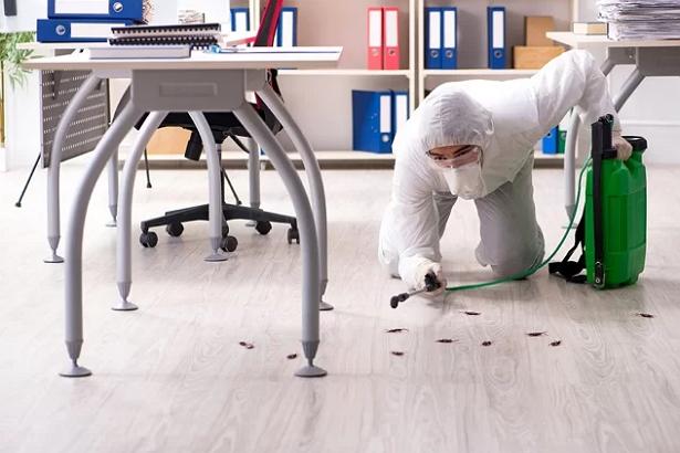 5 Best Pest Control Companies in San Diego