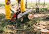 5 Best Tree Services in Austin