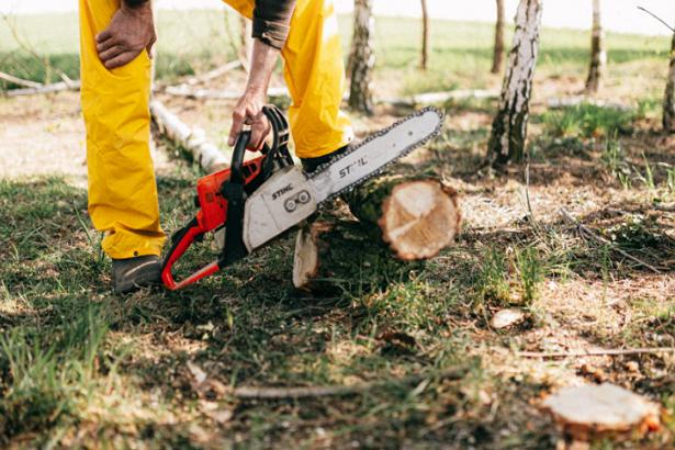 5 Best Tree Services in Austin