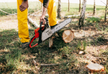 5 Best Tree Services in Chicago