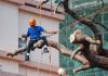 5 Best Tree Services in Fort Worth