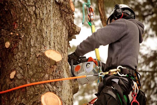 Abraham Bazan's Tree Removal