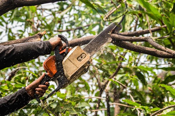 Austex Tree Service