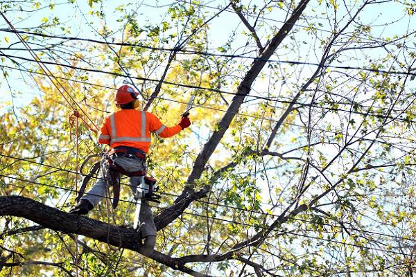 Chicago Tree Service