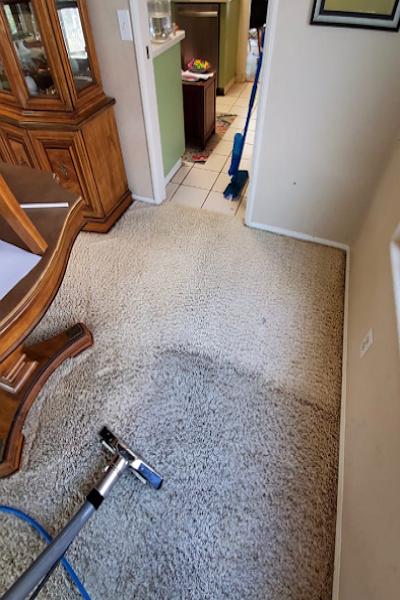 Monster Steamer Carpet Cleaning