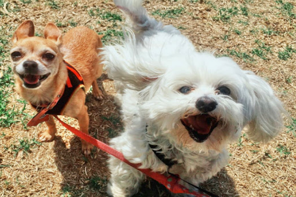 Sniff San Diego - Dog Walkers & Pet Sitters