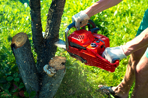 Tree Service Experts Chicago