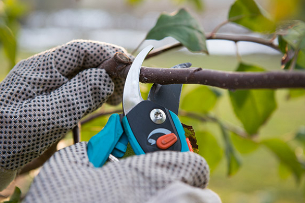 Tree Service Experts Fort Worth