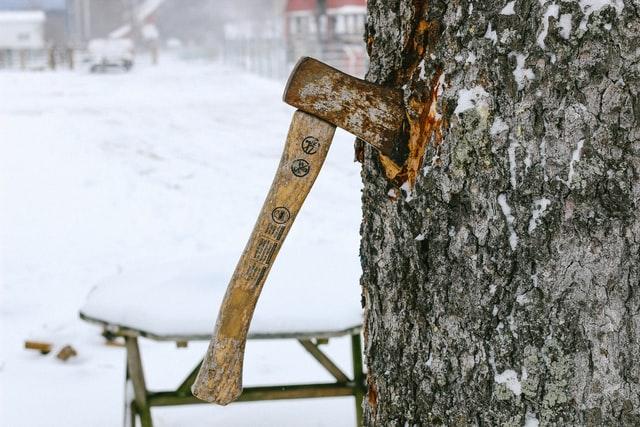 5 Best Arborists in Philadelphia