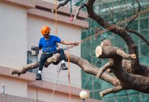 5 Best Arborists in Houston