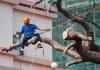 5 Best Arborists in Los Angeles