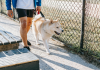 5 Best Dog Walkers in Fort Worth