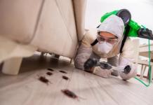5 Best Exterminators in Austin